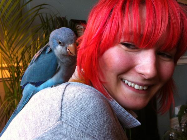 Derren brown parrot